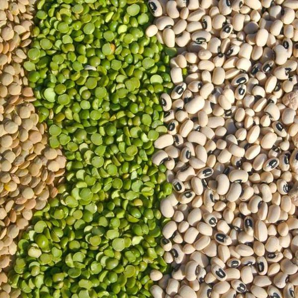Pulses and Lentils Wholesale Europe