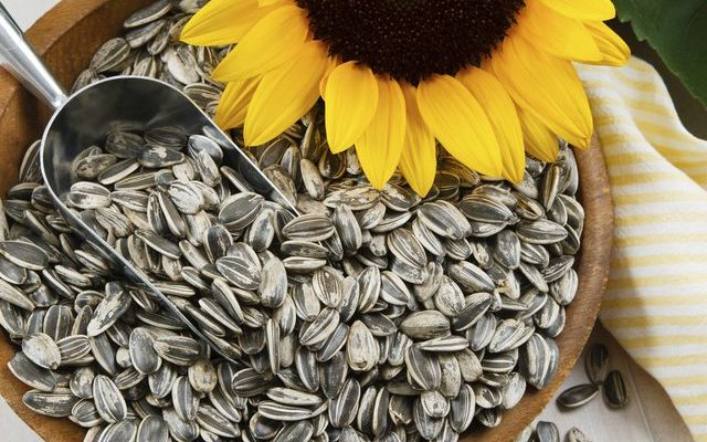 Organic Sunflower Seeds Protein
